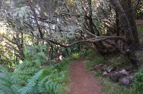 Ein Pfad unter einem Baum mit Ast.