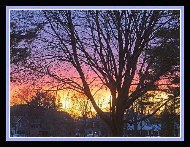 Spring Sunset Silhouette