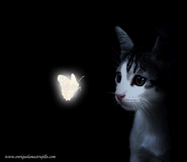dixi-mariposa-iii-noche-negra-flickr
