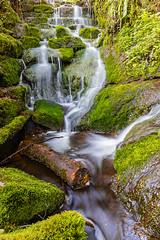 Badger Falls Log
