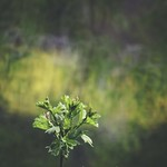 20180428-185401 - Spring Green Bokeh