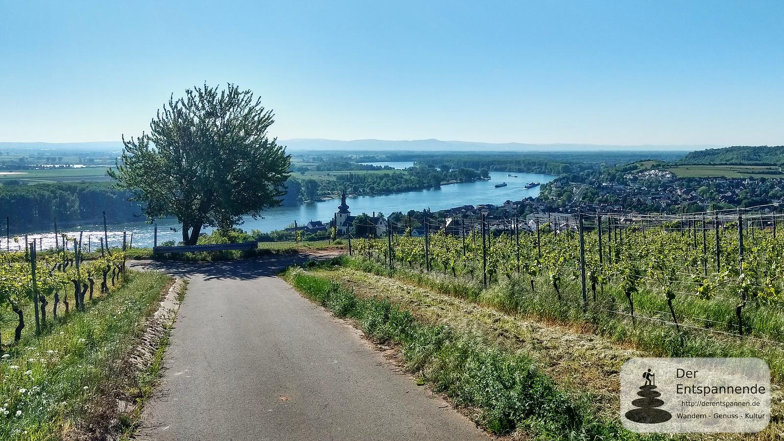 Blick von Niersteiner Wartturm auf Rhein und Nierstein
