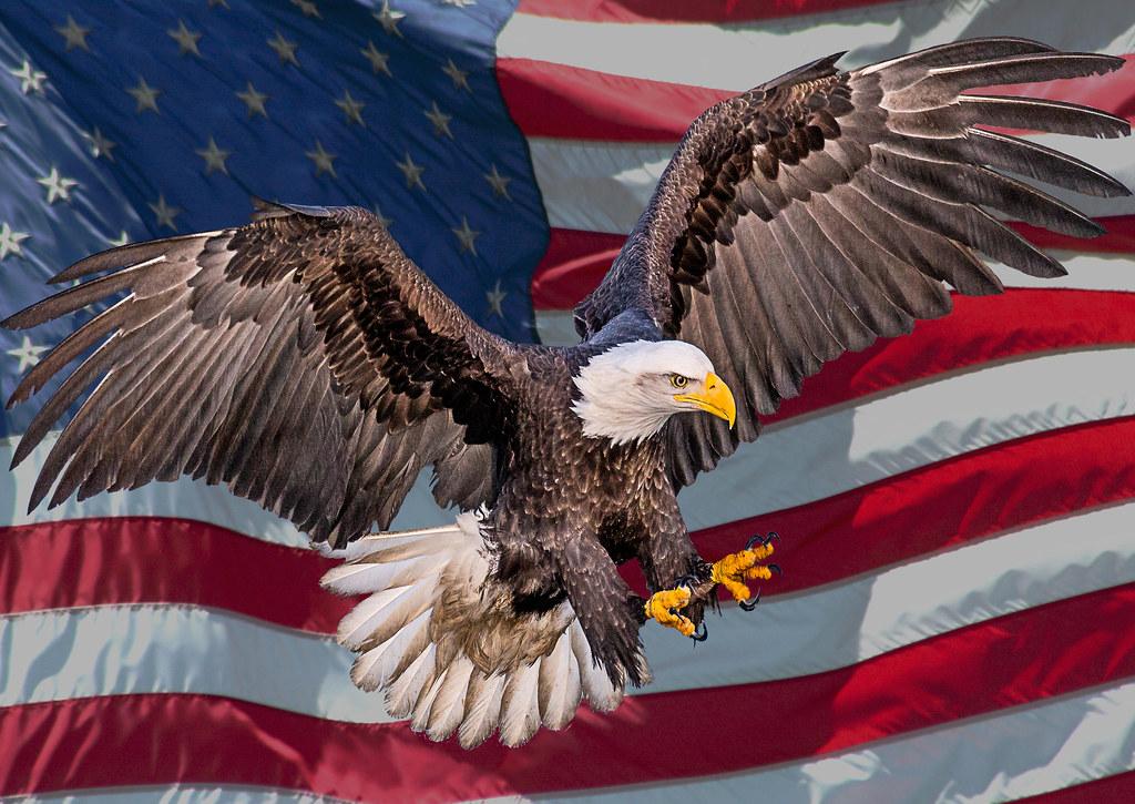 USA Bald Eagle