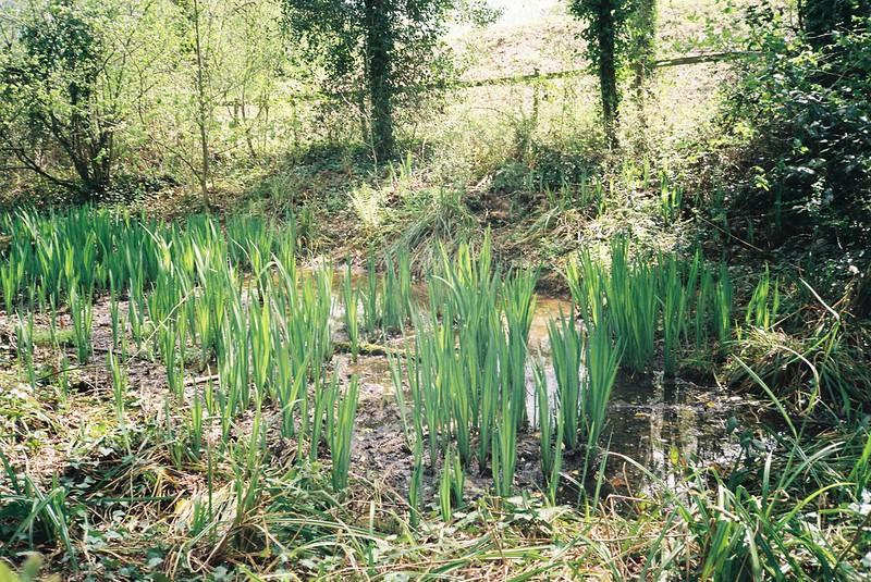 Leigh Woods pond