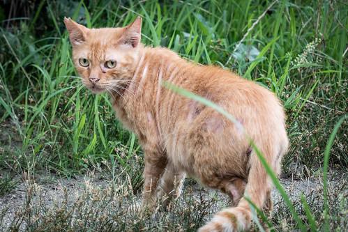 作例:公園のネコ