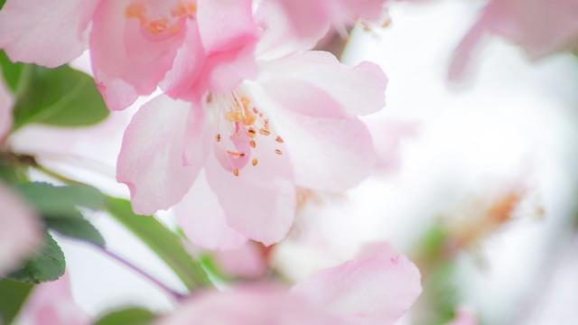 #073 꽃 (Flower), RICOH PENTAX K-1, TAMRON AF70-300mm F/4-5.6 LD MACRO