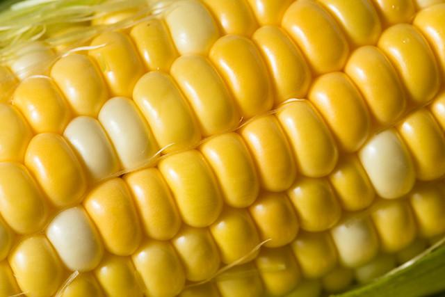 Raw Yellow Corn on the Cobb