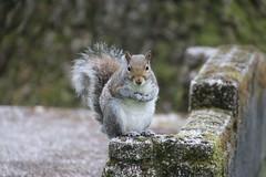 Squirrels of The University of Washington - May 9th, 2018 (Seattle, Washington)