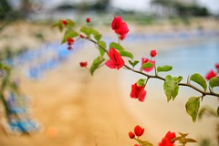 Crystal Springs Beach  (15)