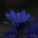 DSC_4883-Edit