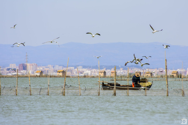 Pescador d' anguila