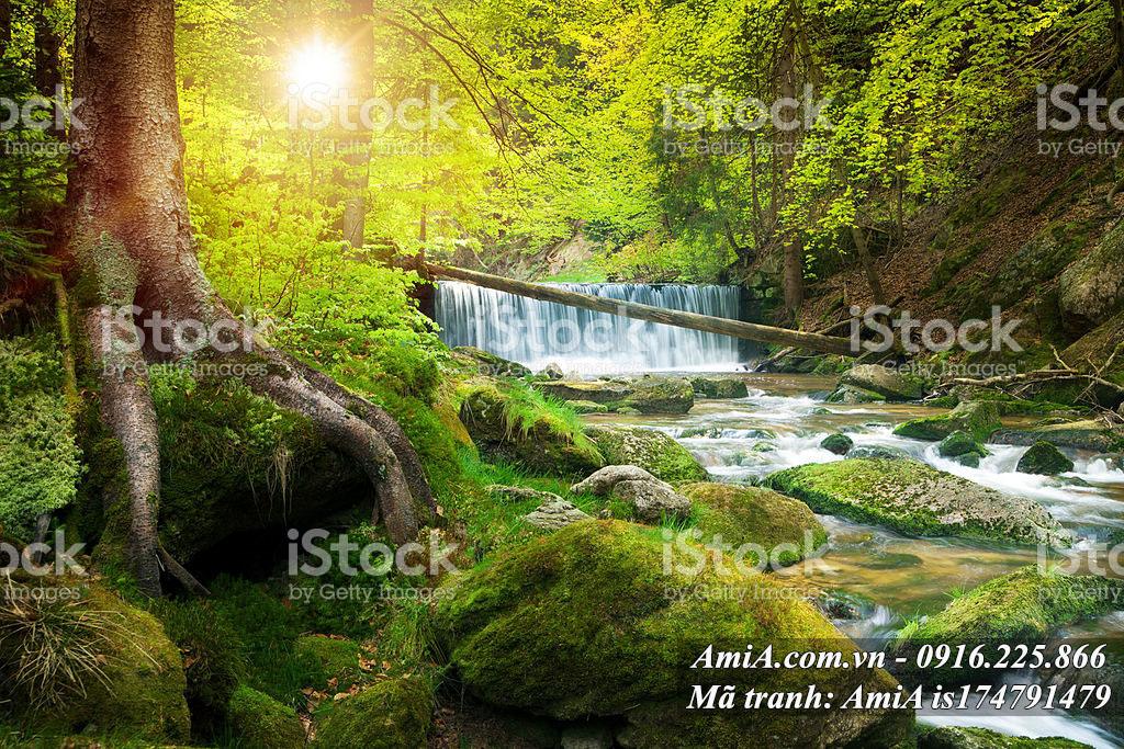 Tranh cánh rừng cây xanh thác nước tươi tốt