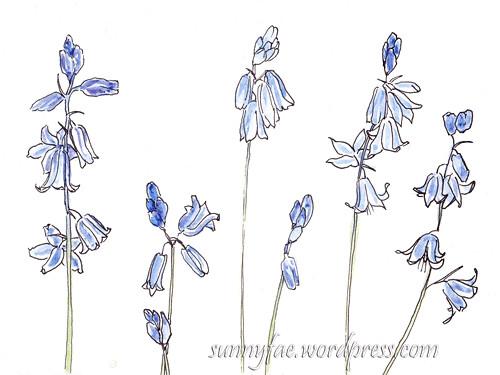 Bluebells sketch
