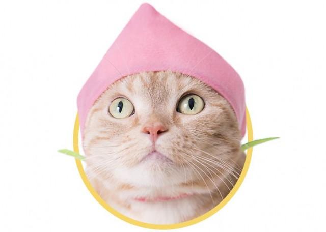 多吃水果有益身體健康~~ 奇譚俱樂部【可愛貓咪頭套。水果貓2】貓星人專屬轉蛋 堂堂第20 彈!! かわいい かわいい ねこフルーツちゃん2