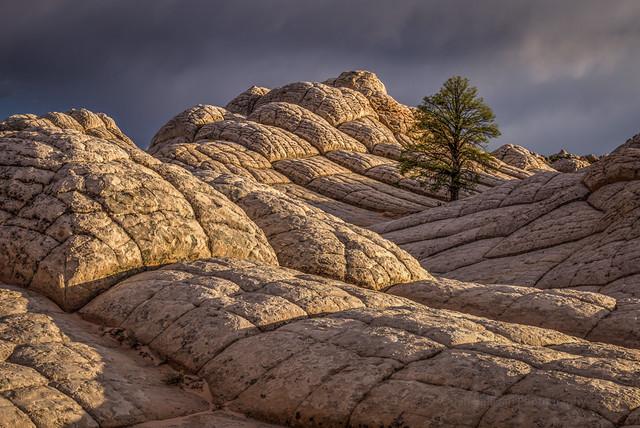 Tree vs. Rock
