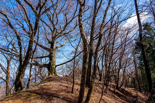 目を見張る原生林の稜線