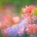 Dream Garden by lfeng1014