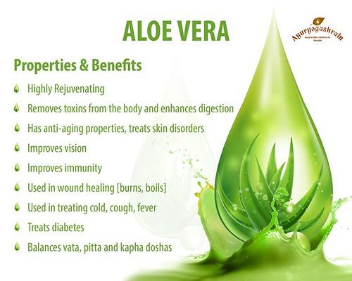 The Amazing health benefits of Aloe Vera... #ayuryogashram #ayurvedacentre #ayurvedictreatment