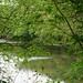 River through the branches