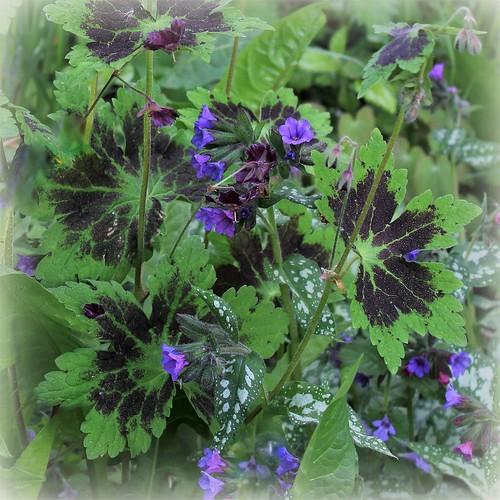les jardins sont beaux en mai ! - Page 4 41314559785_029530fb60