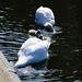 Swan family, West Park