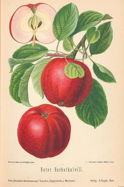 Pomology: Apples and Cider (All Images)