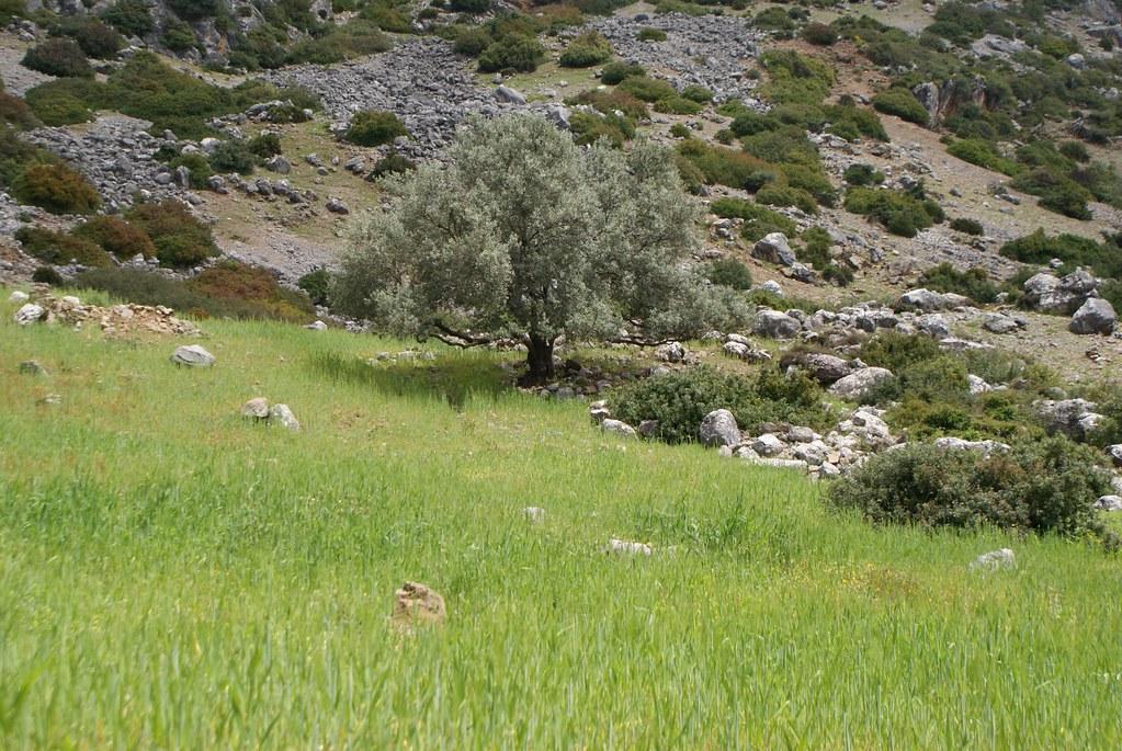 La campagne environnante offre un superbe paysage méditerranéen de montagne.
