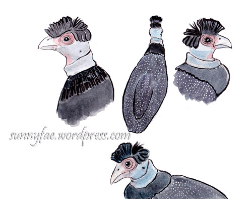 Eastern Crested Guineafowl Sketch