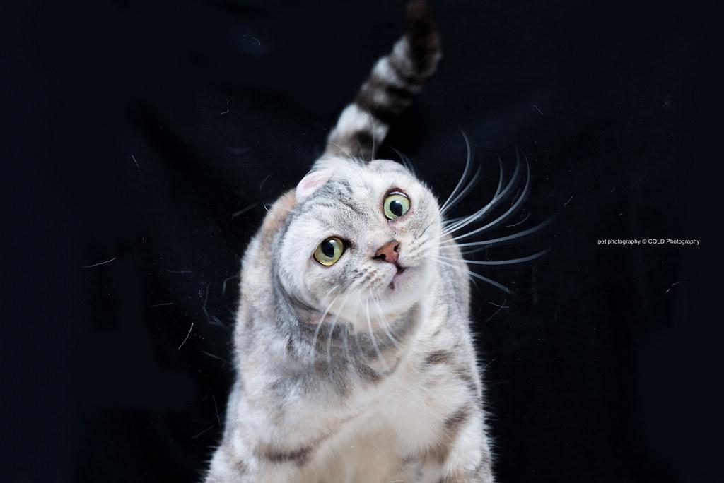 台北寵物攝影 到府拍攝 貓咪攝影 貓咪寫真
