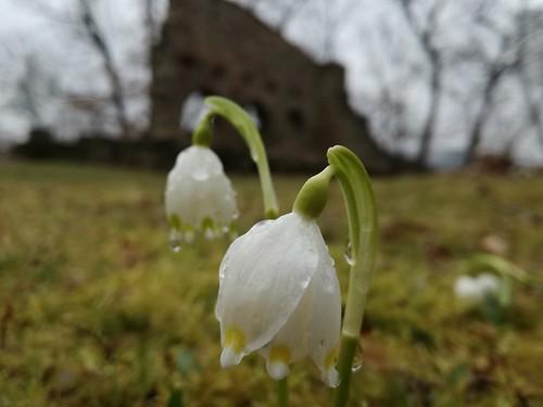 Frühling in Thüringen (4)