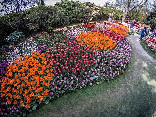 Skagit Valley Tulips-181