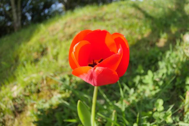 Flower by Kenzo ? ...