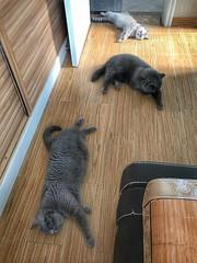 Hot weather, cool floor