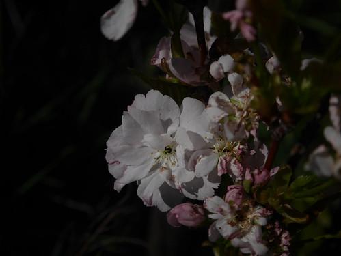explosion florale - Page 3 40701497915_049de22368
