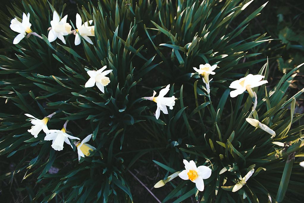 kukkiammaassa14
