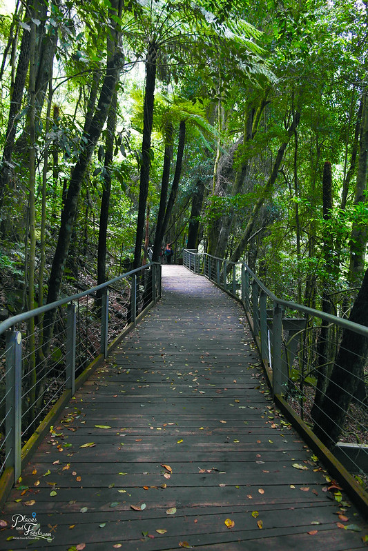 blue mountains scenic walk boardwalk