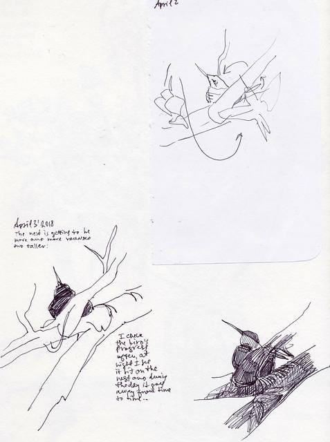 Sketchbook #113: Hummingbird Nest