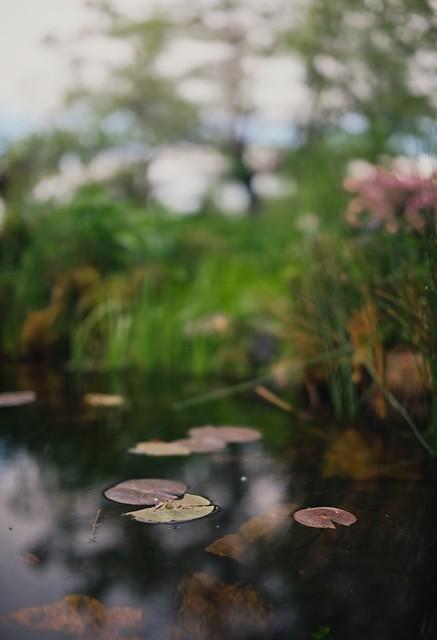 Bokeh Pond