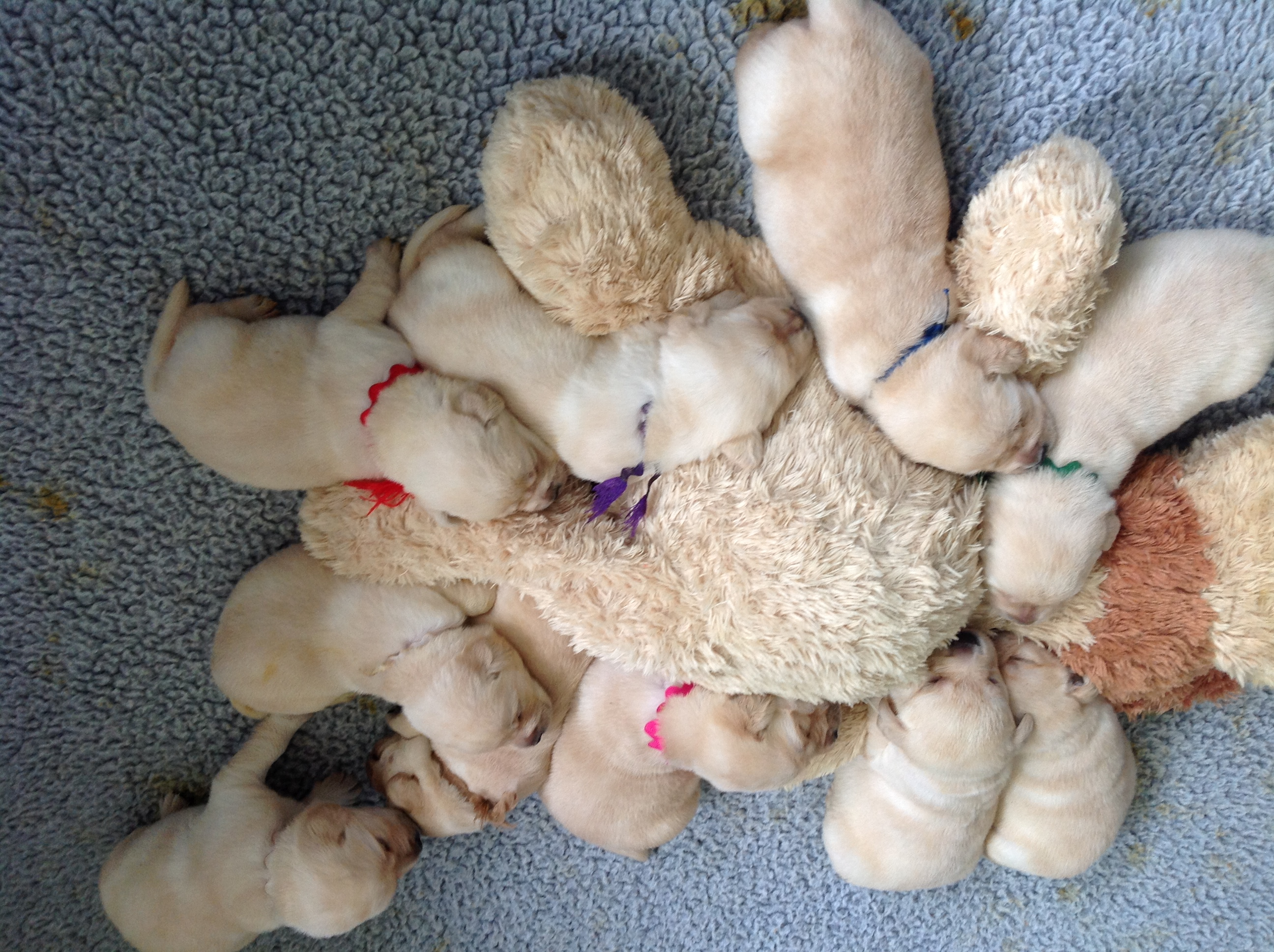 Puppies_friendMay2018