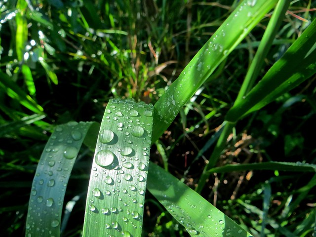 it rained on thursday morning