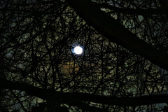 Blue Moon Branches