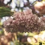 20180508-183149 Spring Garden Bokeh