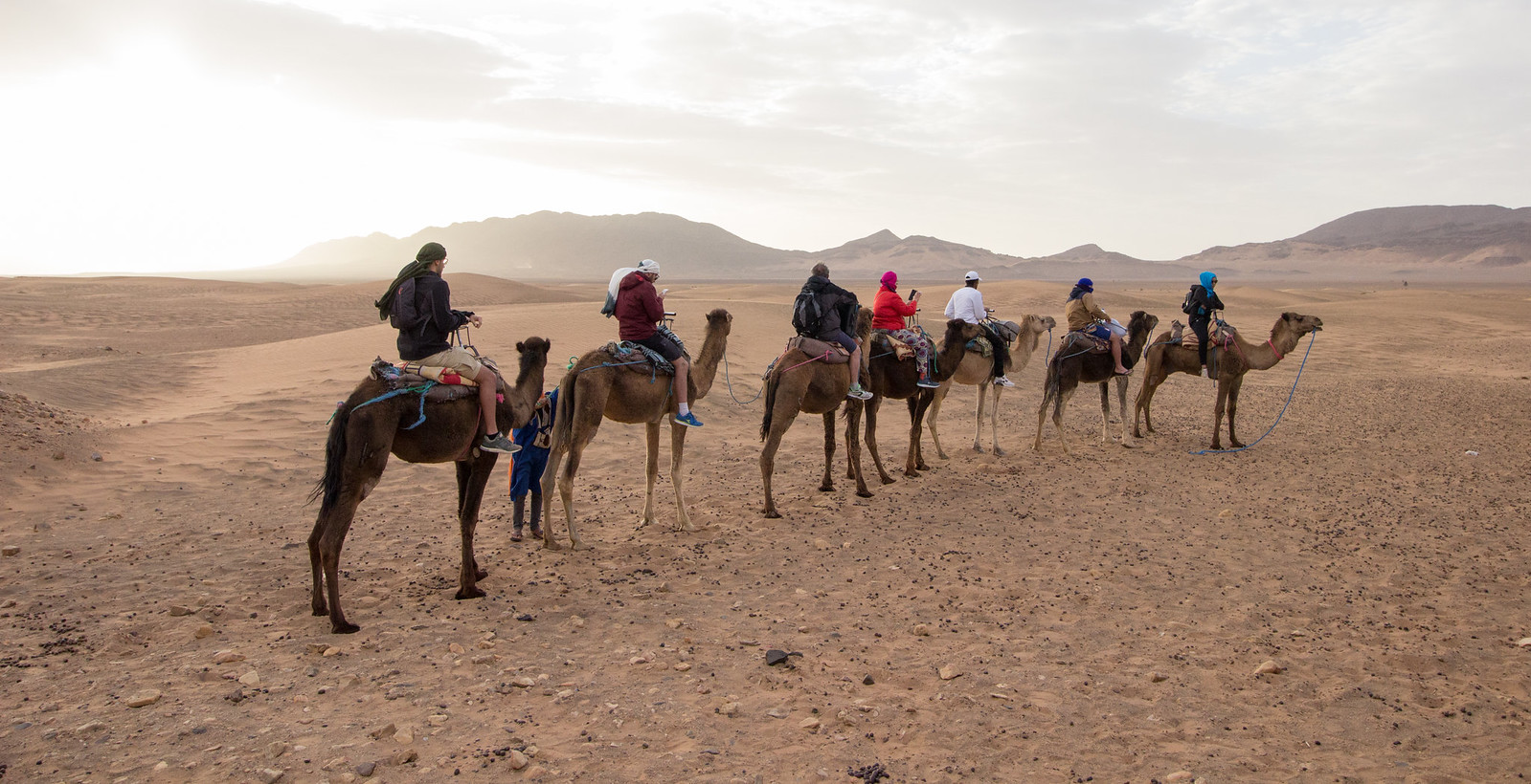 Riding camels in the Sahara desert at sunrise