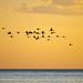 Flamingos over Mar Chiquita