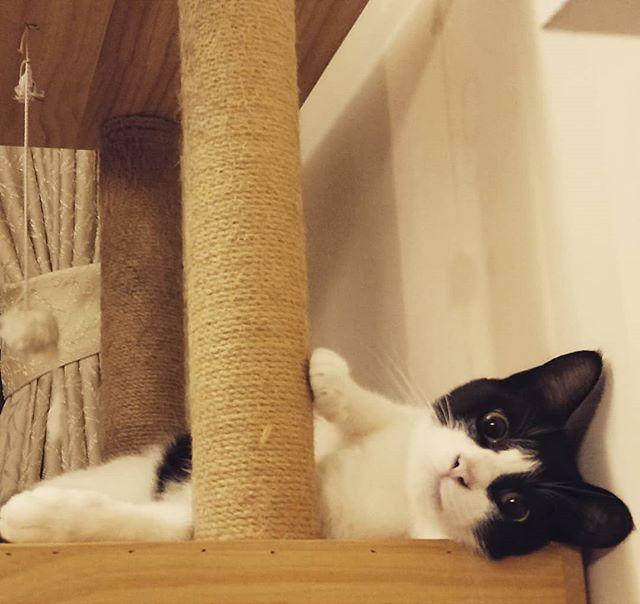 20180516 晚安 #戴家黑糖蜜 #cats #livingwithcats