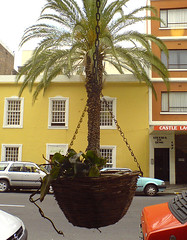 Pot-tree