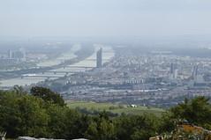 Vienna haze