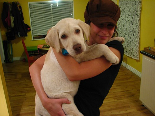 woman holding a 23lb Labrador puppy