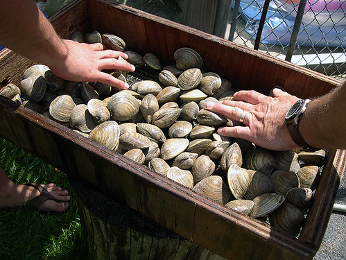Clams, pre-steam