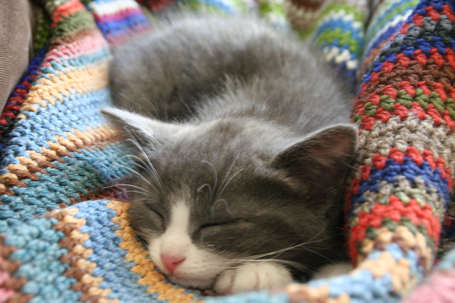 Battersea Dog Blanket Knitting Pattern : Lazing on a Sunday afternoon Explore andedams photos on F? Flickr - ...
